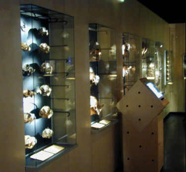 Wall mounted museum showcase 2