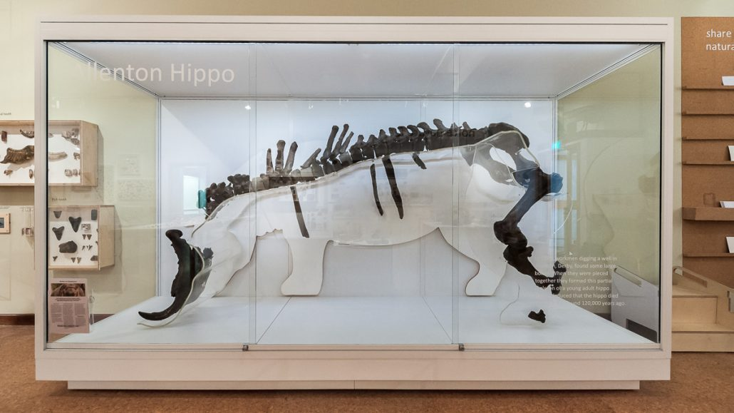custom display case for derby museum